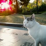 Cat in the park Stock Images