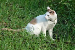 Cat in park. Cat sitting on the grass Royalty Free Stock Image