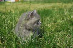 Cat in the park royalty free stock photo