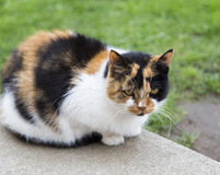 Cat in the park,moscow Royalty Free Stock Photos