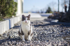 Cat in park portrait. Sitting on the road Stock Photos