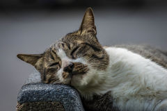 Cat in the park. A sleeping cat in a park stock photos