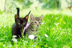 Cat in park royalty free stock photos