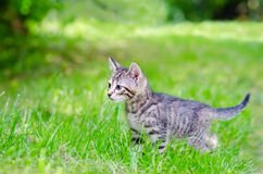 Cat in park Royalty Free Stock Photography