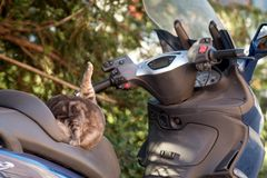 Cat on a parked moped. Takes care of herself Stock Photos