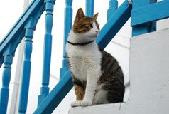 Cat, paros island, Greece. The cat on the stairs stock photo
