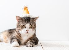 cat with party hat royalty free stock photography