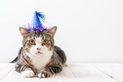 cat with party hat royalty free stock photos