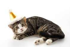 cat with party hat Stock Images