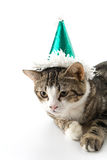 cat with party hat Stock Image