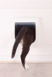 Cat passing through the cat door. At home stock photo