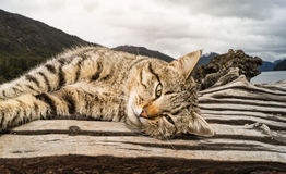 Cat in Patagonia, Argentina Royalty Free Stock Photos