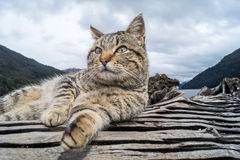 Cat in Patagonia, Argentina Stock Photos
