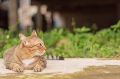 Cat Pattern tailandesa imagenes de archivo