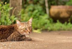 Cat Pattern tailandesa imagen de archivo