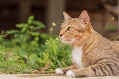 Cat Pattern tailandesa fotografía de archivo libre de regalías