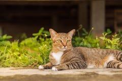 Cat Pattern tailandesa fotos de archivo libres de regalías