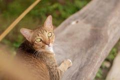 Cat Pattern tailandesa imágenes de archivo libres de regalías