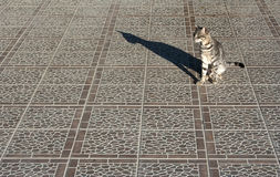 Cat on a pavement royalty free stock images