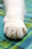 Cat paw. Cat white paw over soft pile blanket stock photos