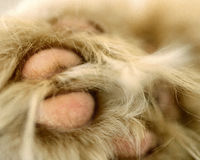 Cat Paw Stockfoto