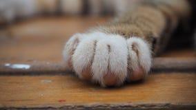 Cat Paw Lizenzfreie Stockfotografie