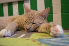 Cat Paw Foto de archivo