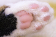 Cat Paw. Alley cat paw close up while she was sleeping Stock Photos