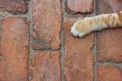 Cat paw on brick floor  backgrounds Stock Photo