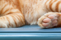 Cat paw on brick floor  backgrounds Stock Photos
