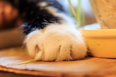 Cat paw. On the table with flowers royalty free stock images