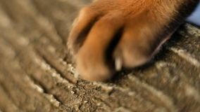 Cat Paw With Claws stock footage