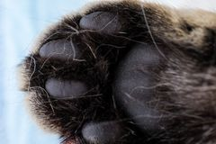 Cat paw closeup. And white background stock images
