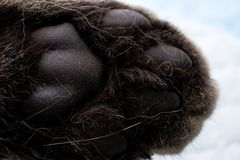 Cat paw closeup. And white background royalty free stock photography