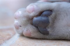Cat paw. Detail of cat paw royalty free stock photography