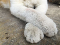 Cat paw in detail dirty Royalty Free Stock Photos
