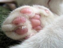 Cat Paw enrugado branca foto de stock royalty free