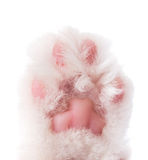 Cat paw isolated Royalty Free Stock Images