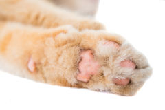 Cat paw isolated Stock Photo