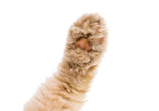 Cat paw isolated Royalty Free Stock Photos