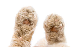 Cat paw isolated Stock Photography