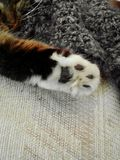 Cat paw Stock Photo