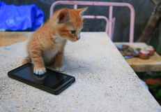 Cat paw of kitten orange-red small on cell phone Select focus with shallow depth of field.  stock image