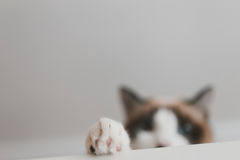 Cat paw Stock Image