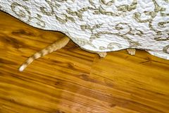 Cat paw peeking under the bed. High angle shot of cat paw peeking under the bed Stock Photo