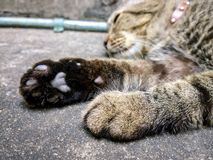 Cat  paw, Sleepy cat on a floor Royalty Free Stock Photos