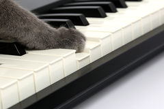 Cat paw touches the piano keys