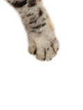 Cat paw. On the white background stock image