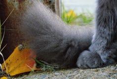 Cat Paw y cola fotos de archivo