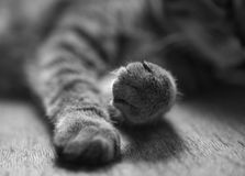 Cat paws Stock Images